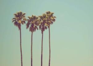 【ロサンゼルス】年間の天気と気候。ベストな服装とは?